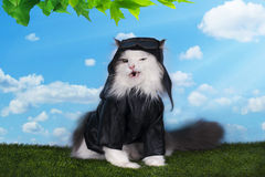 Cat in a suit against the sky pilot Royalty Free Stock Image