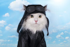 Cat in a suit against the sky pilot Stock Photos