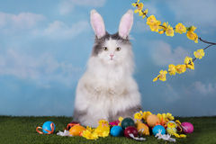 Cat in the suit bunny celebrates Easter Royalty Free Stock Images