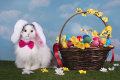 Cat in the suit bunny celebrates Easter Stock Photos