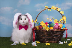 Cat in the suit bunny celebrates Easter Royalty Free Stock Image