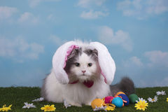 Cat in the suit bunny celebrates Easter Royalty Free Stock Photos