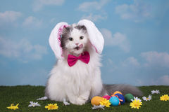 Cat in the suit bunny celebrates Easter Royalty Free Stock Photo
