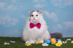 Cat in the suit bunny celebrates Easter Stock Image