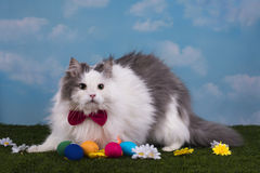Cat in the suit bunny celebrates Easter Stock Photo