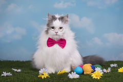 Cat in the suit bunny celebrates Easter Stock Photography