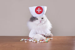 Cat in a suit of the doctor gives medicine Stock Images