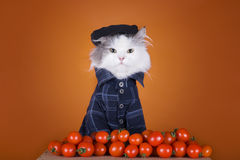 Cat in a suit Georgian sells tomatoes Stock Images