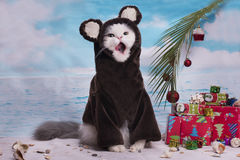 Cat in a suit monkey celebrates Royalty Free Stock Photos