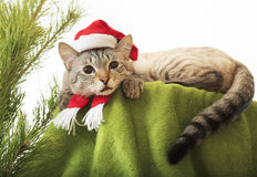 Cat in a suit of Santa Claus. Stock Photos