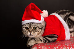 Cat in a suit of Santa Claus Stock Photos