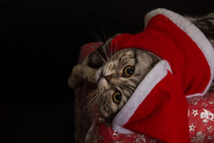 Cat in a suit of Santa Claus Royalty Free Stock Image