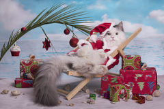 Cat in a suit of Santa Claus. Celebrates Christmas on the beach stock images