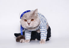 Cat in a suit of the seaman. Royalty Free Stock Photo