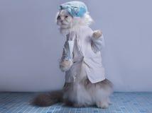 Cat suit surgeon preparing for surgery Stock Photo