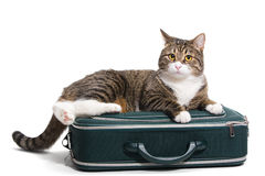 Cat in a suitcase Stock Photography