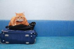 Cat On Suitcase Stock Photos
