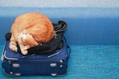 Cat On Suitcase Stock Image