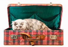 Cat in suitcase Royalty Free Stock Image