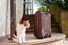 Cat and suitcase. A tired cat with a suitcase stock photos