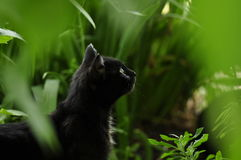Cat in the summer garden. Stock Photo