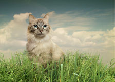 Cat in summer. The cat is walking on the grass Stock Photos