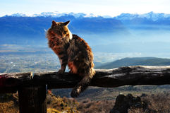 Cat on the summit of the mountain in Argentina, Bolson royalty free stock image