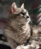 Cat In Sun. Cat Next To Window With Sun Shining Through Blinds Stock Photos