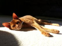 Cat sun bathing on carpet Royalty Free Stock Photography