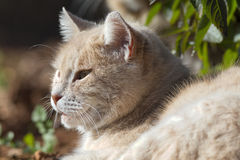 Cat in the sun. A cat catching the winter afternoon sunshine Royalty Free Stock Photography