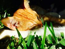 Cat. Sun, grass, ear, hair Royalty Free Stock Photos