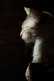 Cat in the sun. A light-colored tabby cat in the sun with eyes closed Stock Photo