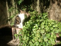 Cat on the sun in plants and tree. A beatifull Cat seated on the sun near green plants and trees looking at the camera Royalty Free Stock Photography