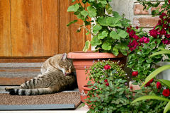 Cat in the sun Royalty Free Stock Image