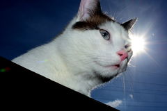 Cat and sun royalty free stock images