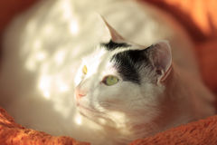 Cat and sun Royalty Free Stock Image