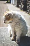 Cat sunbathing. Street cat sleeping on a sunny day Stock Image