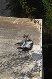 Cat sunbathing royalty free stock images