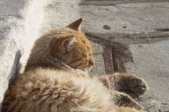 Cat Sunbathing Stock Photo