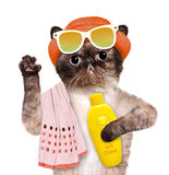Cat with sunblock. Royalty Free Stock Image