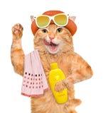 Cat with sunblock. Stock Photos