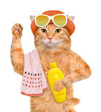 Cat with sunblock. Stock Image