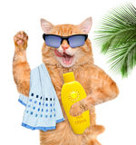 Cat with sunblock. Stock Photography