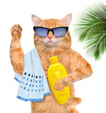 Cat with sunblock. Isolated on white Stock Images