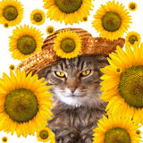 Cat with sunflowers. Cat with straw hat and sunflowers all around her. She is calico and has golden eyes royalty free stock image