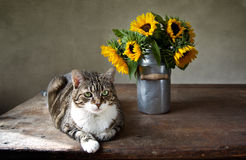 Cat and Sunflowers Stock Image