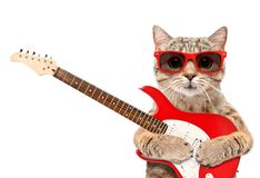 Cat in sunglasses with electric guitar. Isolated on white background stock images