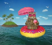 Cat eating ice cream on the sea royalty free stock images