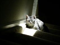 Cat in Sunlight. Typical American Short hair cat sitting in sun beam Stock Photos