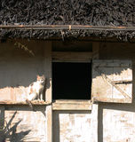 Cat sunning next to village house window. Cat sunning itself outside village hut in the Himalayan mountains, Singalila Trail Royalty Free Stock Photography
